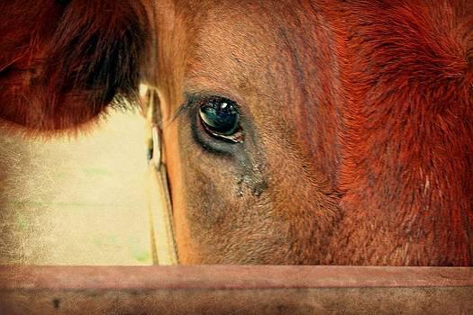 Eye to Eye by Jo Sheehan