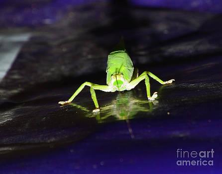 Face Of A Grasshopper by Jiss Joseph