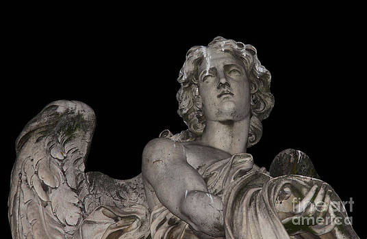 Face of an Angel by Chris Hill