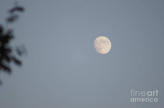 Face of the Moon by Nicholas Pena