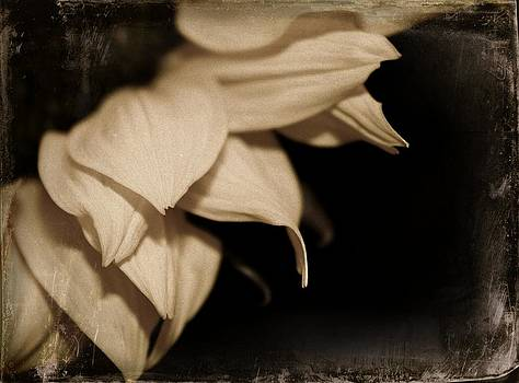 Faded Sunflower by Cathie Tyler