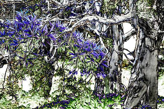 Diana Haronis - Faery Trees