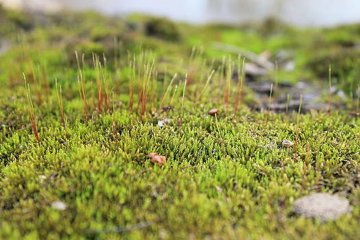 Rebecca Frank - Fairies carpet 3