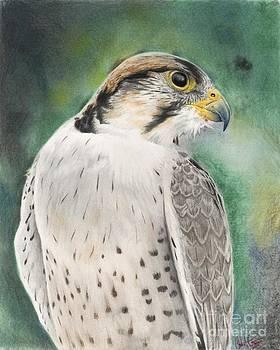 Christian Conner - Falcon