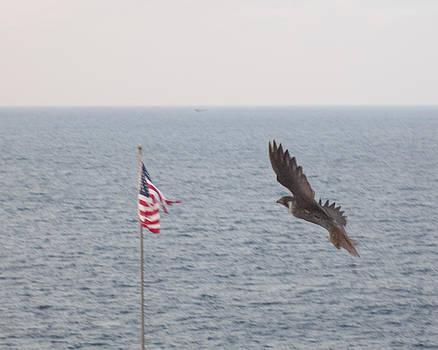 Falcon in flight by Bill Perry