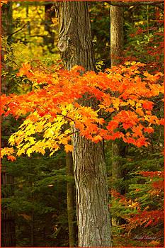 Fall 3 by Fuad Azmat