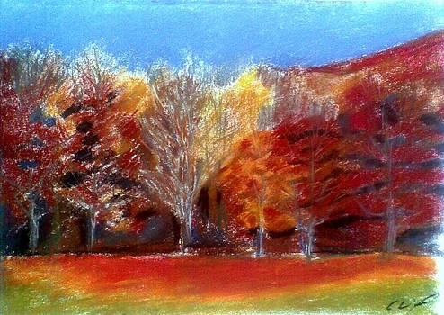 Fall 8 by Vaidos Mihai