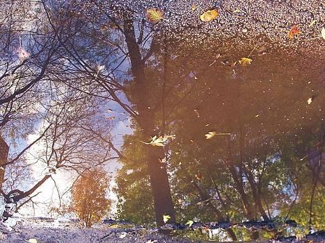 Fall Asphalt by Anna Villarreal Garbis