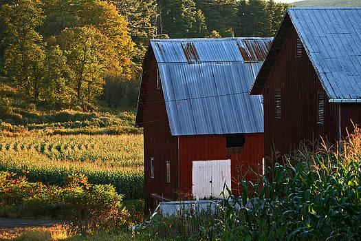 Fall Barns by Frank Morales Jr