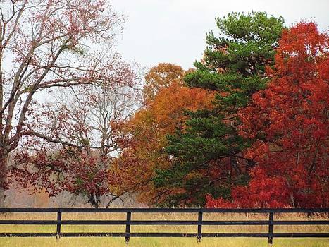 Fall Beauty by Ginger Wemett