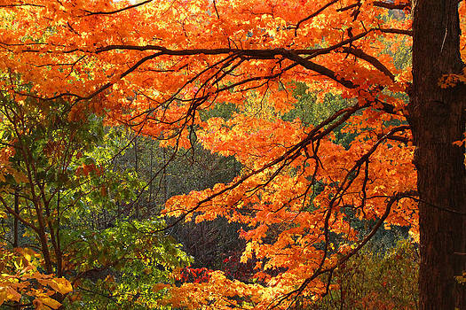 Fall Canopy by James Hammen