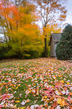 Fall Carpet by Amit Khanna