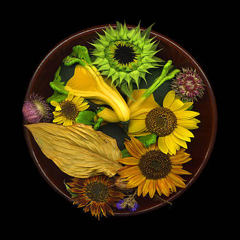 Fall Colors by J Arthur Davis