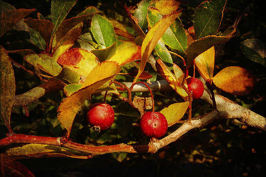 Milena Ilieva - Fall Colors