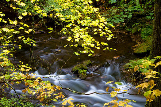 Jonathan Hansen - Fall Colors of Whatcom Creek 1