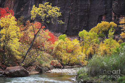 Fall Colours Virgin River Zion No2 by George Hodlin