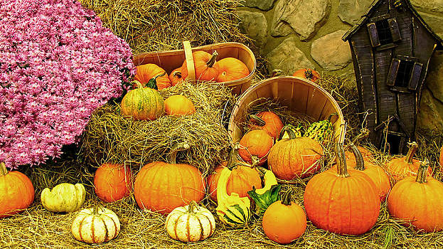 Chantal PhotoPix - Fall Cornucopia - Autumn Thanksgiving Harvest - Bumpy Gourds and White Pumpkins in Wicker Baskets