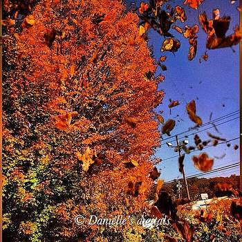 Fall by Danielle McNeil