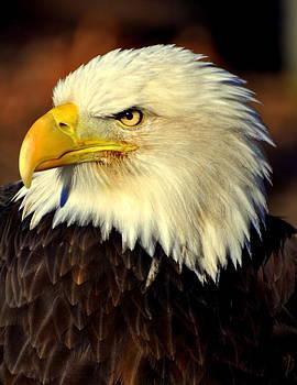 Marty Koch - Fall Eagle 5