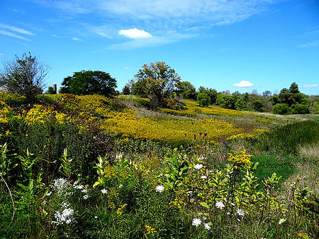 Fall Fields near Petrolia by Bruce Ritchie