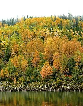 Fall Foliage by Sylvia Hart
