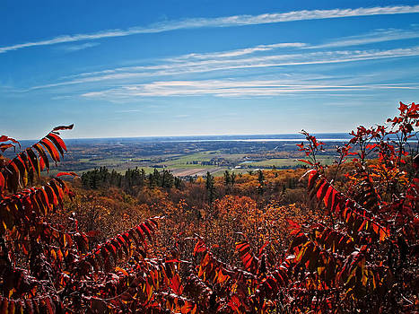 Chantal PhotoPix - Fall Foliage viewed through Red Leaved Sumac Trees