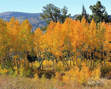 Fall Gathering  by Carla   Stanley