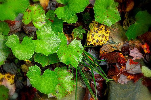 Fall Green Leaves 5831   by Ken Brodeur