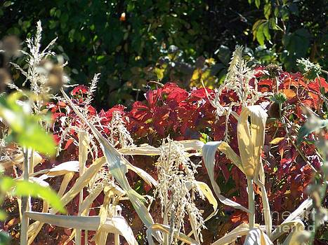Fall Harvest of Color by Dorrene BrownButterfield