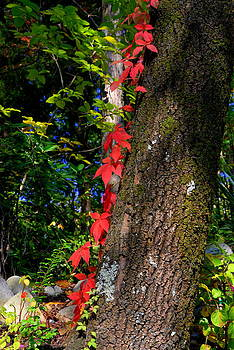 Fall in Georgia by Curtis Brackett
