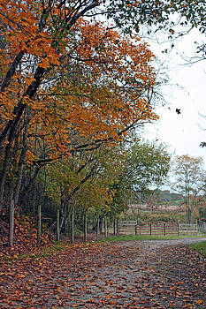Fall in Ohio by Janet Pugh