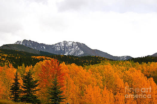 Fall in the mountains by Bianca Collins