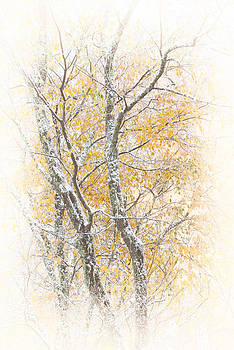 Fall into Winter by John Pattenden