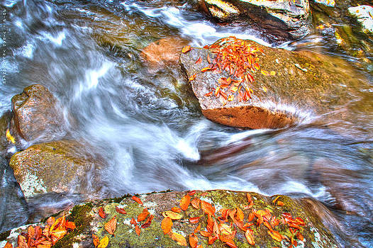 Fall Is The Season by Virag Yelegaonkar