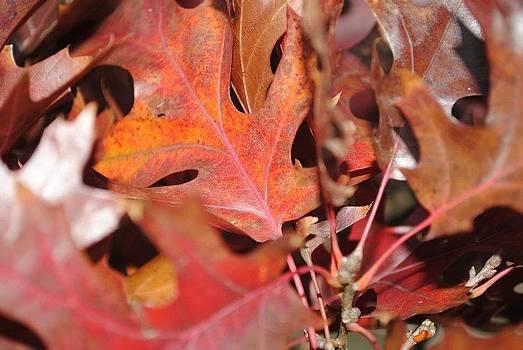 Fall by Kimberly Harrison