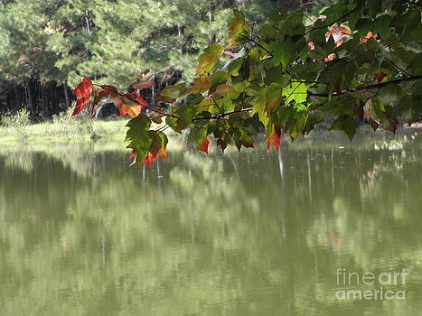Fall leaves by the pond by Cindy Hudson