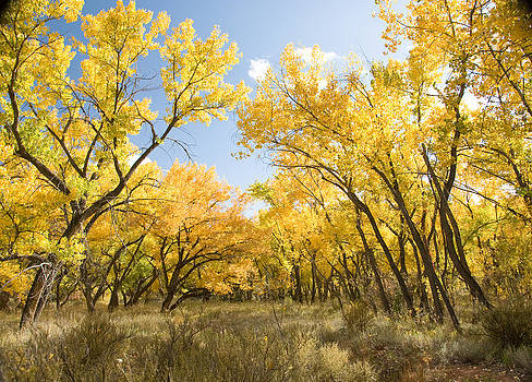 Fall Leaves in New Mexico by Shane Kelly