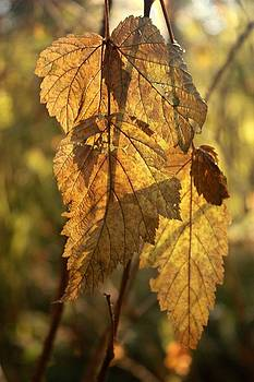 Fall leaves by Peggy Quade