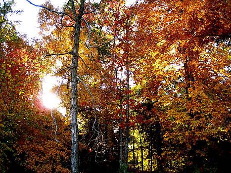 Fall Light by Julia Pratapas