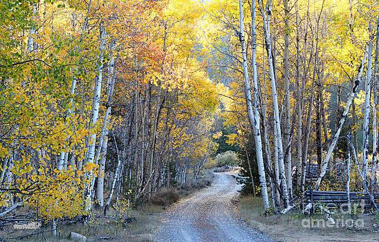 Fall by Lisa Kidd