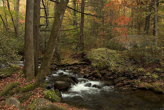 Fall Magic in the Forest by Cindy Rubin