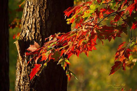 Darlene Bell - Fall Maple