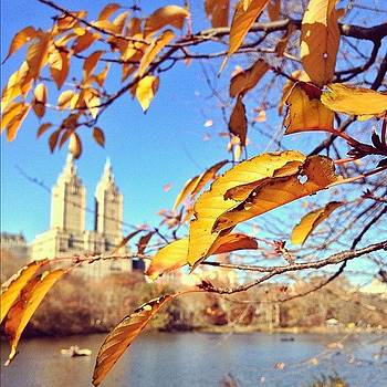 Fall. #nyc by John De Guzman