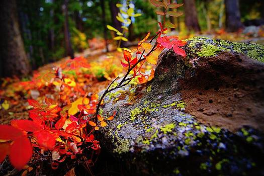 Fall on the Ground by Rhonda DePalma