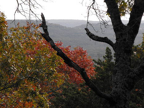 Fall picture in Texas by Rebecca Cearley