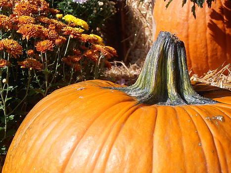Kimberly Perry - Fall Pumpkin