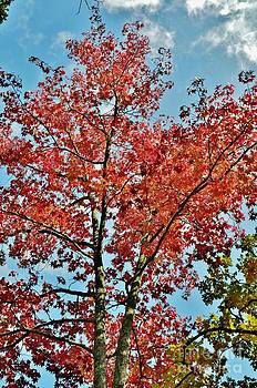 Fall Reds and Sky Blues by Dwayne Cain