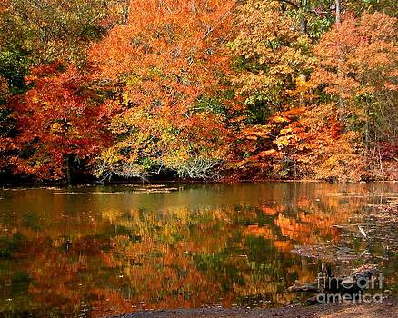 Anne Ferguson - Fall Reflection