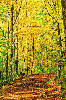 Fall Road in the Woods 3234  by Ken Brodeur