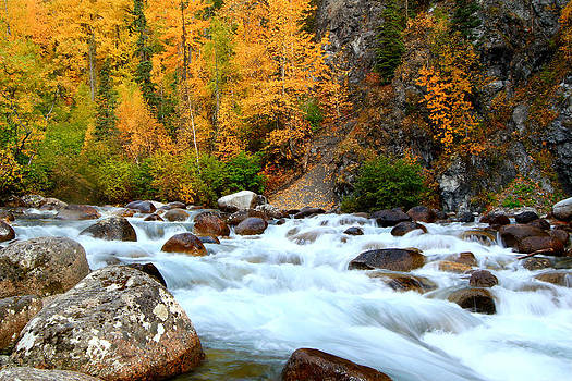 Fall Rush by Kelly Turnage